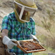 Christopher Carlberg, senior enviornmental science major, wears protective gear while holding up a frame of the containment box. The box is covered in fresh honey-saturated combs from a bee farm in San Bernardino for his business, Hallelujah Honey. Courtney Coleman | Banner