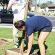Jasmine Emeish |Banner Pua Wong, freshman biology major, helps plants trees during the Spring Arbor Day event April 2 at California Baptist University.
